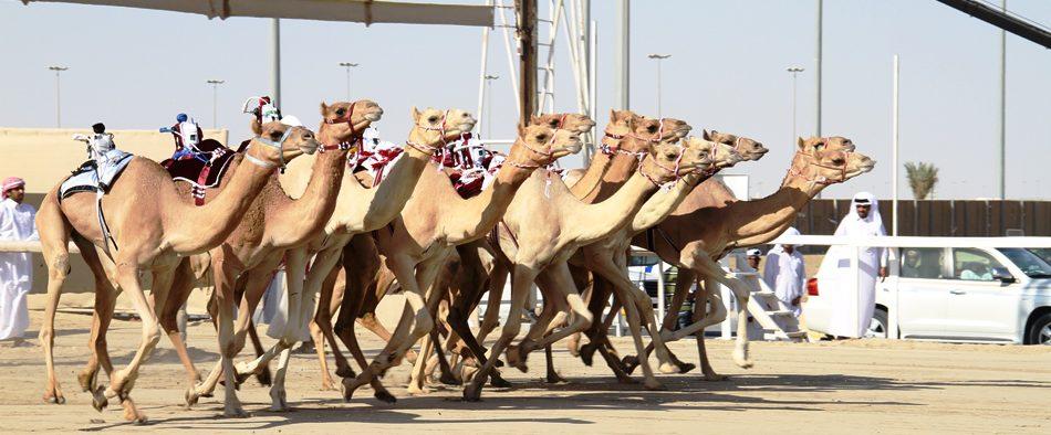 اللجنة المنظمة تعلن برنامج السباق المحلي الأول بالشحانية ولبصير