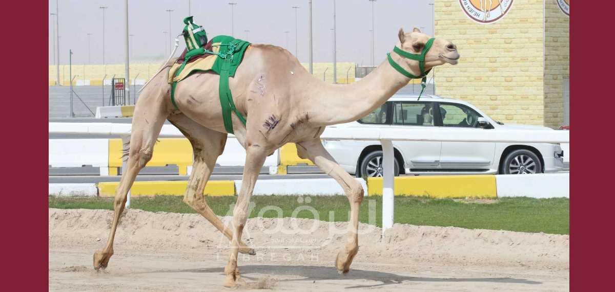 شعار صاحب السمو الملكي الأمير عبدالعزيز بن سعود يتسيد رئيسي الحيل