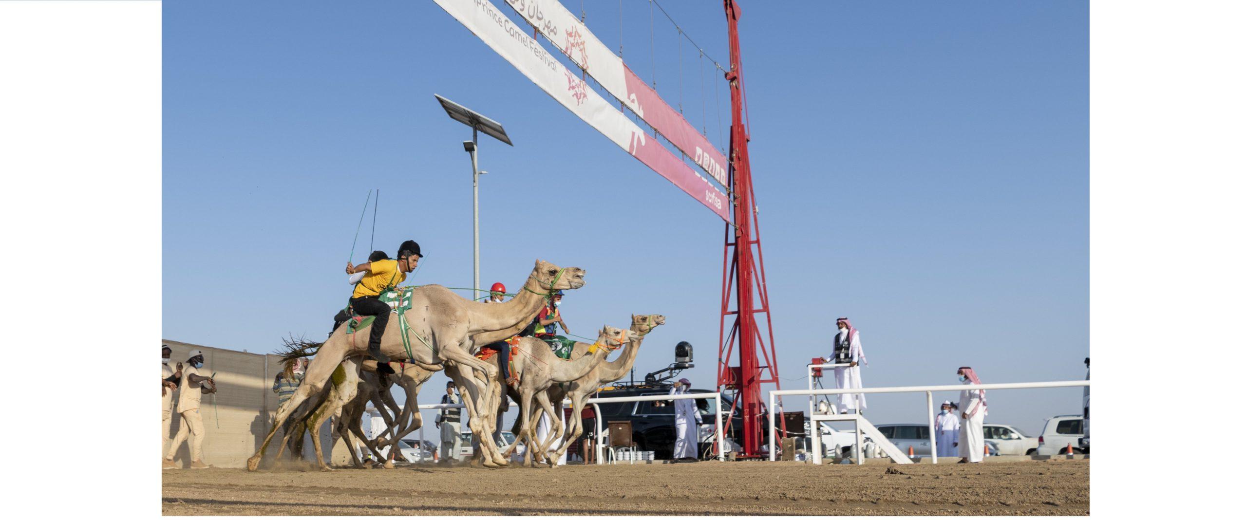 الماراثون يسدل الستار على تمهيدي مهرجان ولي العهد للهجن بالسعودية