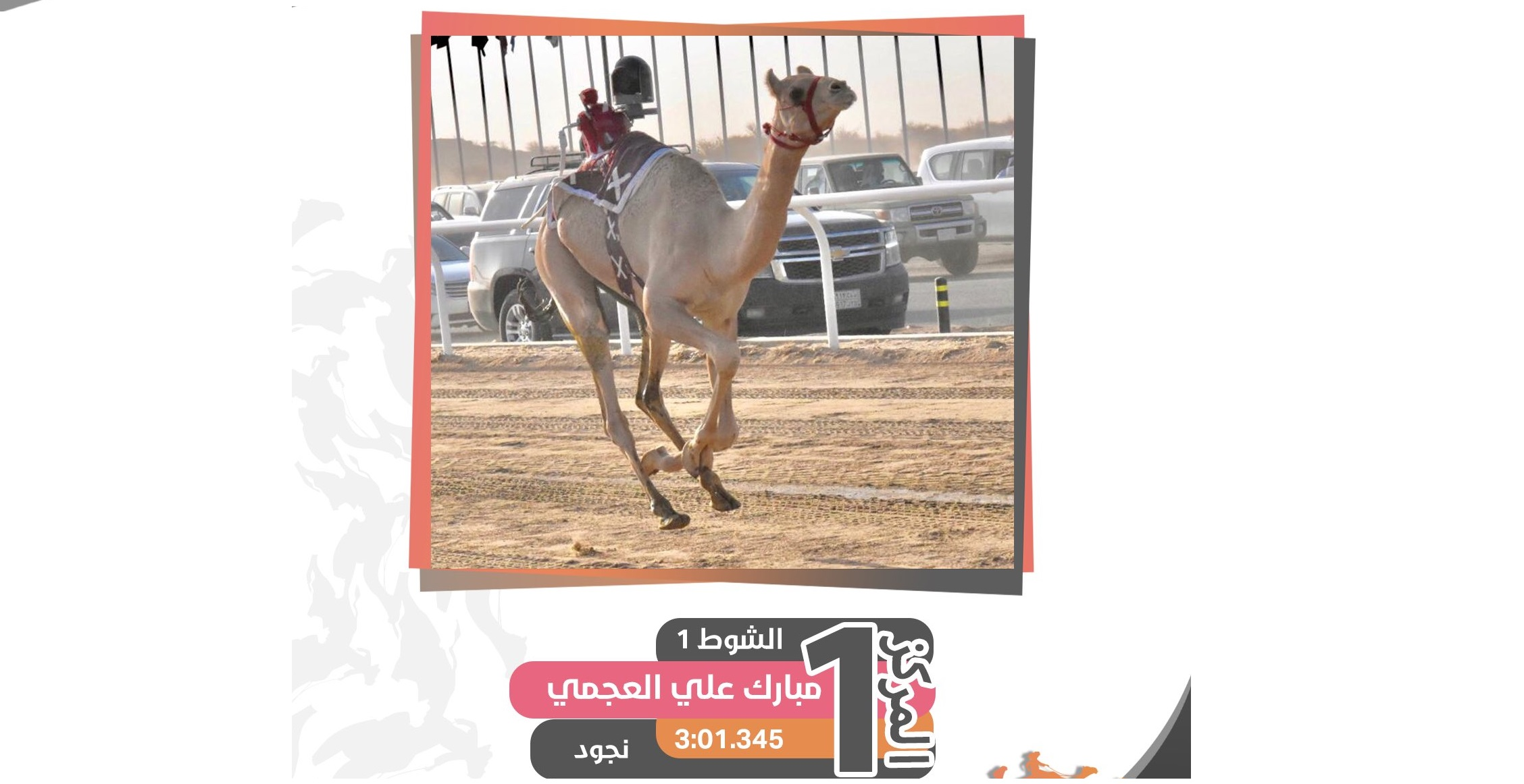 شعار مبارك العجمي يقص شريط النواميس لثاني أيام مهرجان ولي العهد للهجن بالسعودية