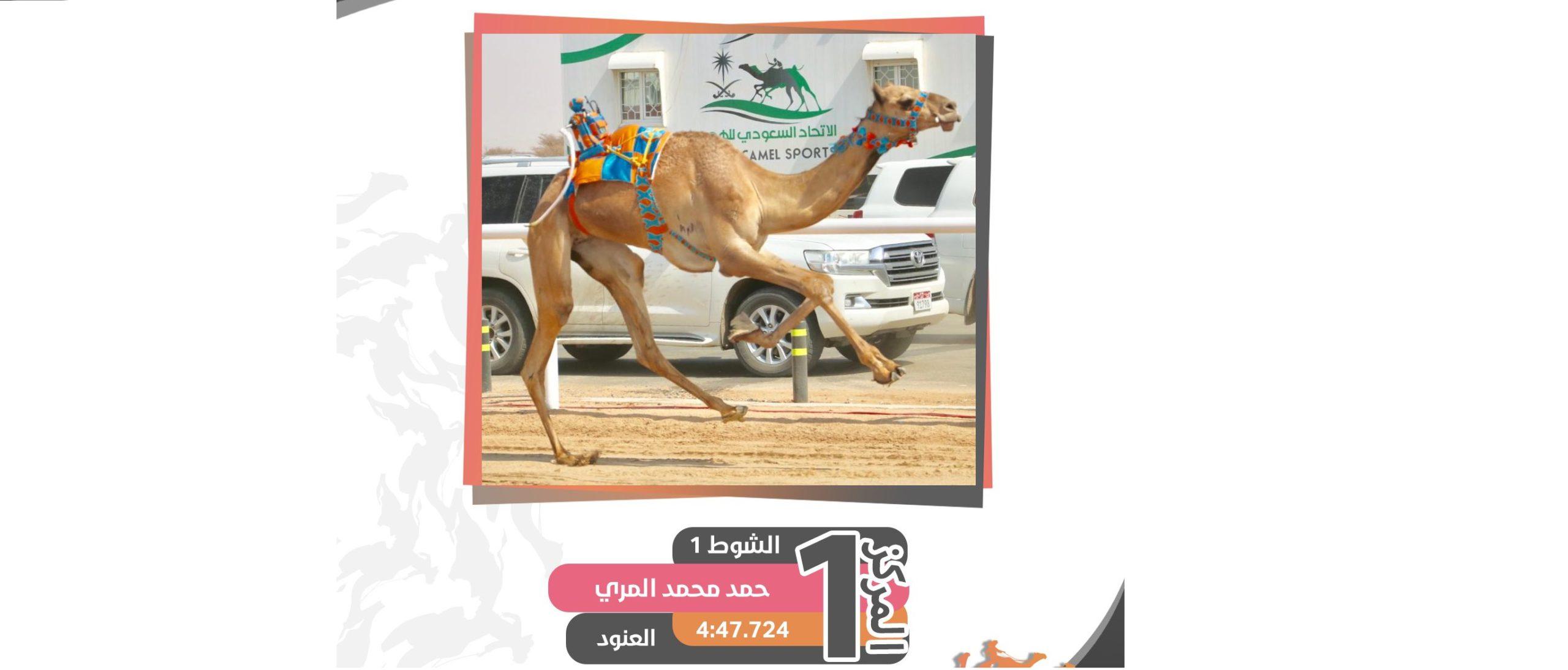 شعار آل صافيه يظفر بناموسي الحقايق عام